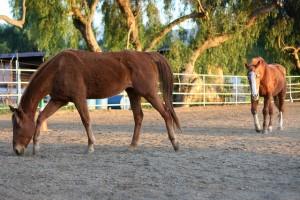 Tailing Anya