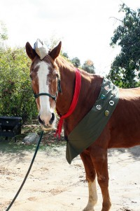 Horse Scouts